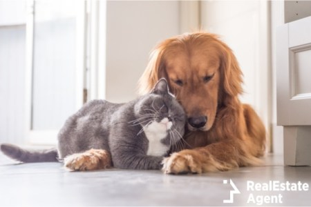 A cute kitty and adorable doggo hanging out
