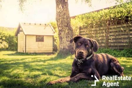 Dog garden house