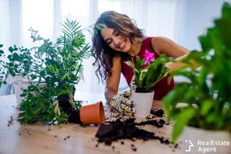 Planting home plants indoor hands