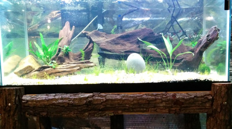 Planted Tank, Aquarium Plants