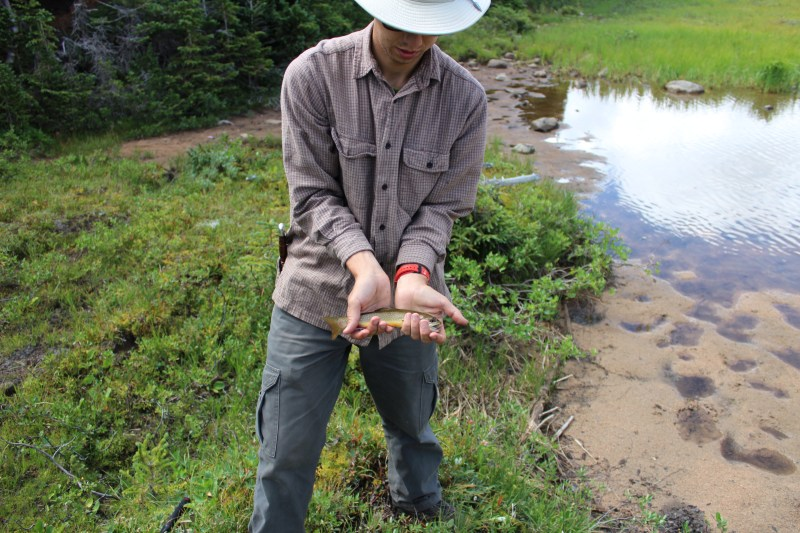 A small brook trout out of Sandbar Lake
