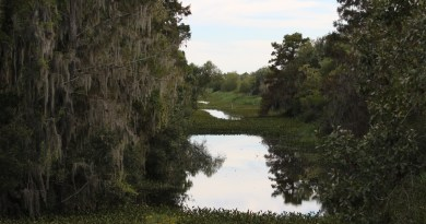 Louisiana bayou in Jean Lafitte