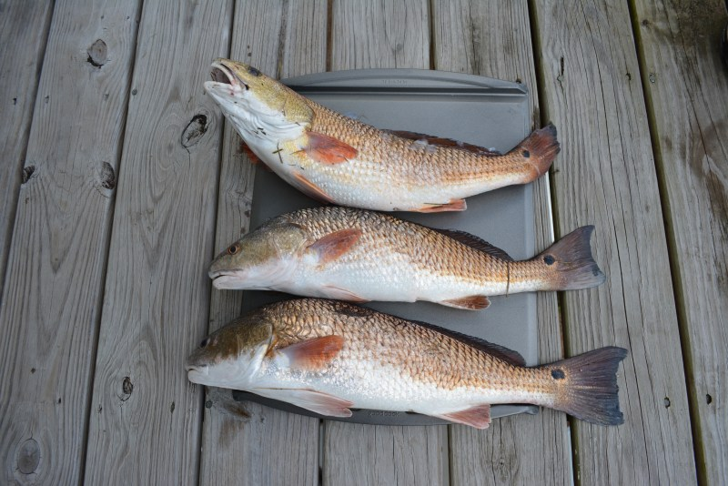 Pointe Aux Chenes, Kayak Fishing, Redfish