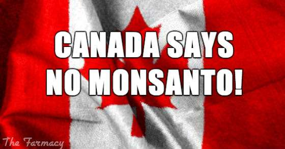 monsantos-seed-imperialism-halted-in-canada