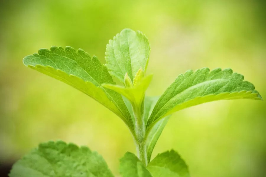 How to Use Stevia and The Best One