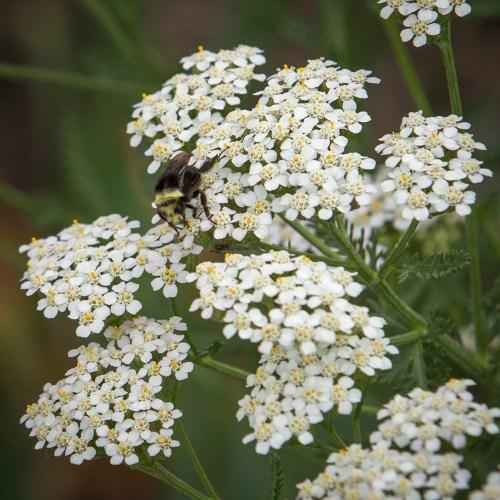 Blog | Real Gardens Grow Natives | Design, Plant, and Enjoy