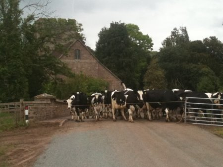 Rush hour at Stanton Lacy
