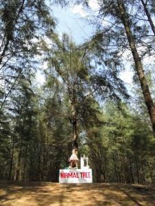 NIRMAL TREE