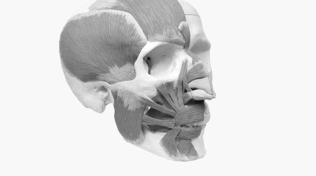 Anatomy-3_4-10401-1024x571