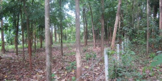 LAND FOR SALE AT KANNUR DIST