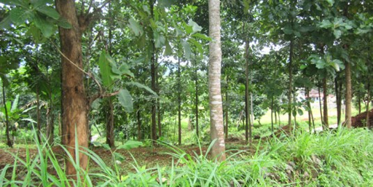 House for sale at Palakkad Dist.