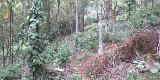 Land for sale at Wyand