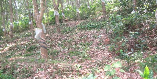 Land for sale at Calicut Dist.