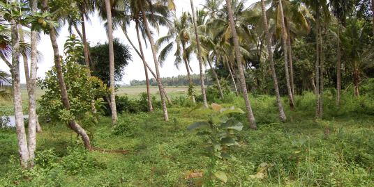 Most beautiful scenic waterfront property within corporation limit of Thrissur – Chettupuzah