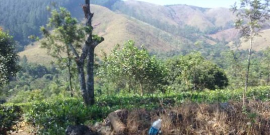 RESORT LAND FOR SALE AT VAGAMON, IDUKKI