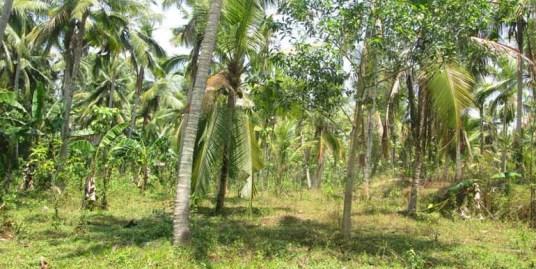 Property near Aruvikkara