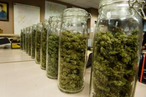 jars-of-marijuana