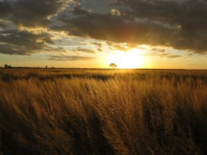 sunset-wheat-field-856983-gallery