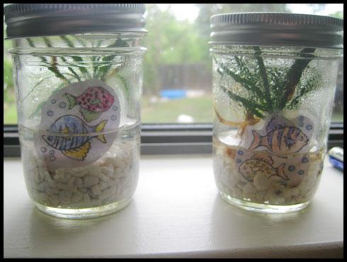 """""""Aquariums"""" in Mason Jars"""