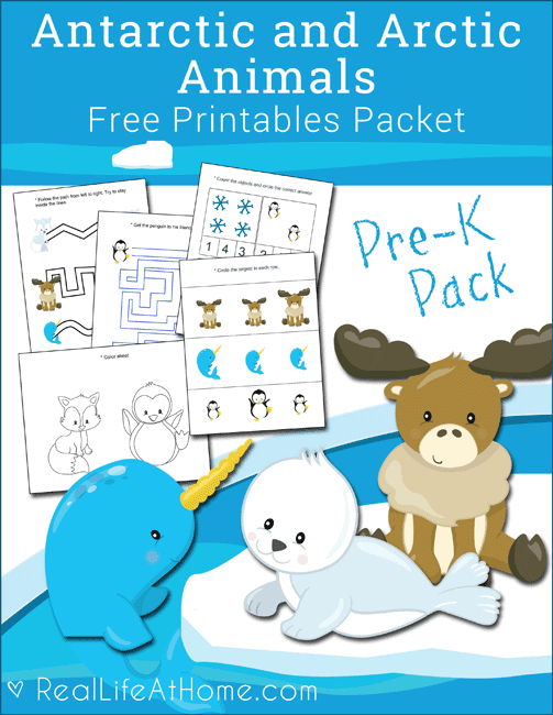 arctic animal activities for preschool free antarctic and arctic animals printables packet for 790