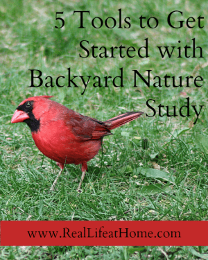 5 Tools to Get Started with Backyard Nature Study