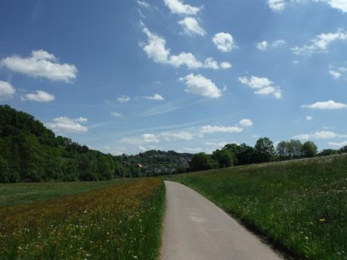 Wildflowers and blue skies