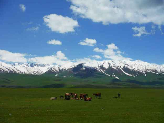 wild horses in the tien shan