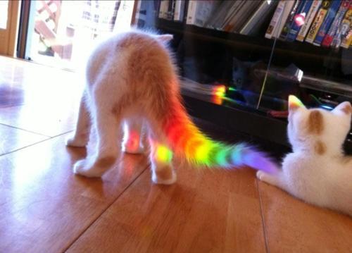 Rave Kitty