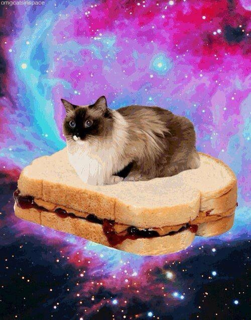 cat on bread