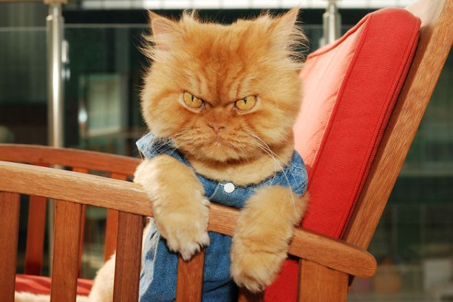 The Angriest Cat In The World