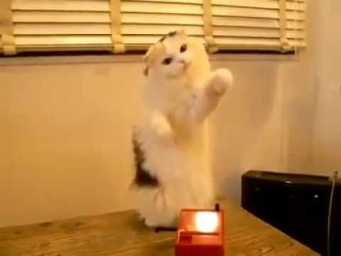 Cat Playing A Theremin