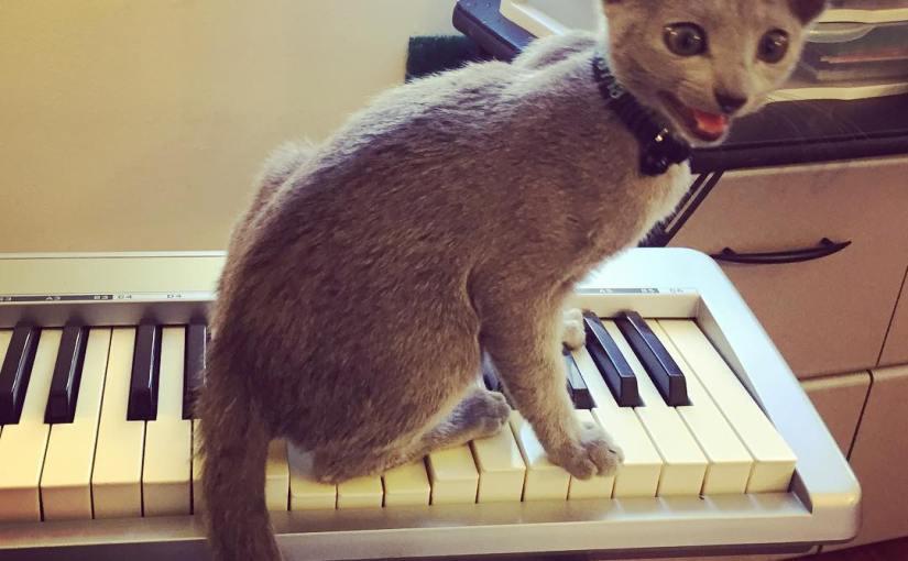 I can haz melodiez?