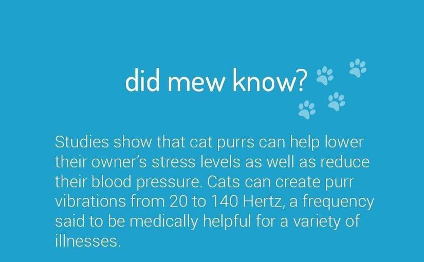 @kittea_sf with @repostapp ・・・ Did mew know? Studies show that cat purrs can help lower their owner's stress levels as well as reduce their blood pressure. Cats can create purr vibrations from 20 to 140 Hertz, a frequency said to be medically helpful for a variety of illnesses
