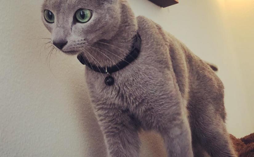 Portrait of a meow