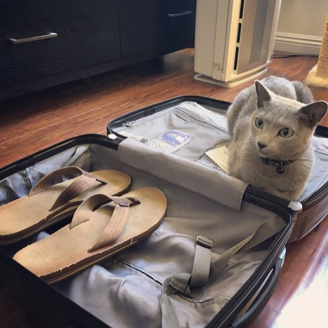 Hooman: Sorry Boris, you can't come with me all the way to Vermont to visit my nephews! But don't…