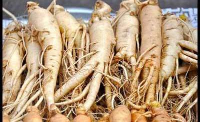 Ashwagandha Root thyroid levels