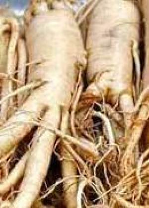 Ashwagandha studied for more than 50 medical conditions.