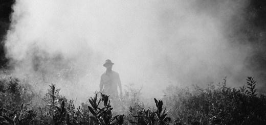 Herbicides and pesticides exposure Parkinson's disease