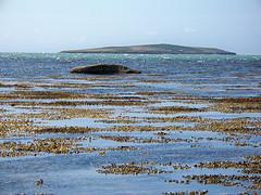 Brown seaweeds healthy glucose