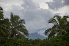 tropical plants going extinct in climate warming