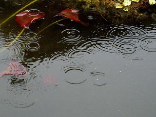 pesticides and rain