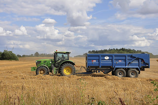 does glyphosate cause wheat allergy?