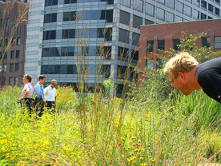 green roofs microbreaks increase attention and performance