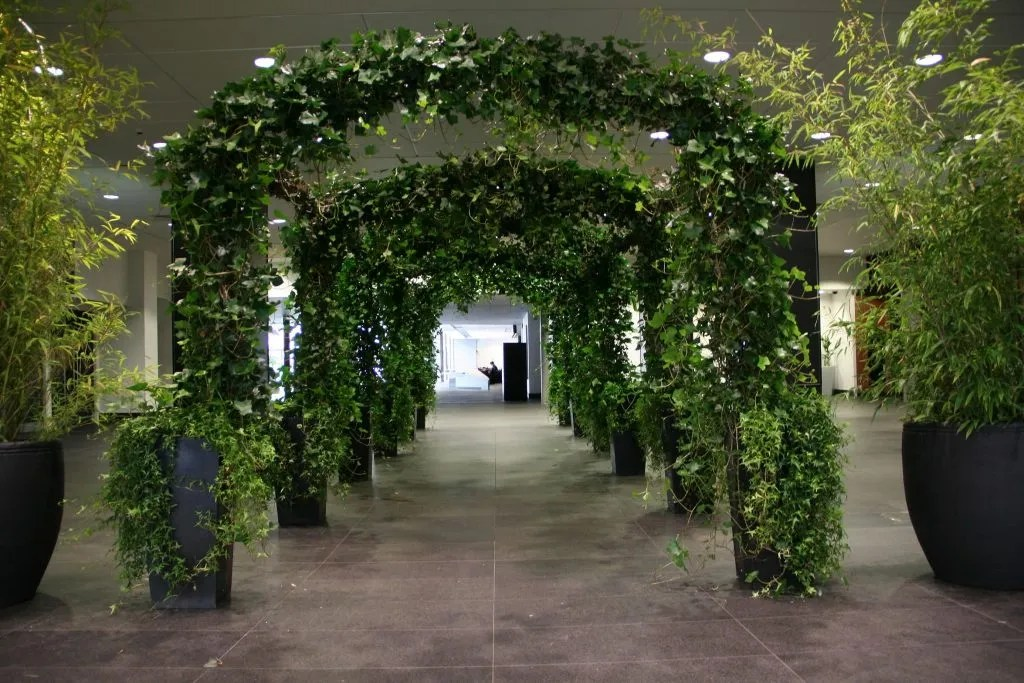 Wedding Arches and Arch Walkways  Hiring trees plants