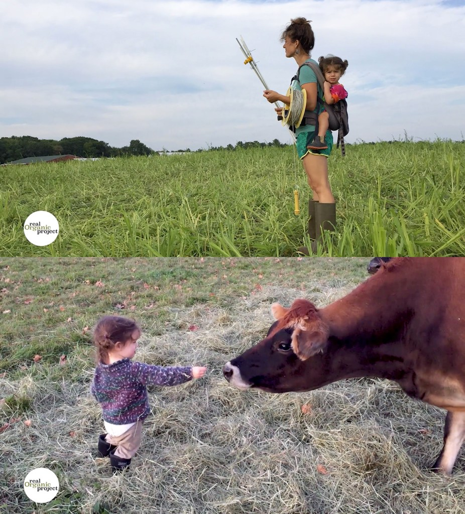 rotational grazing at Milkhouse Dairy Farm and Creamery is a family affair