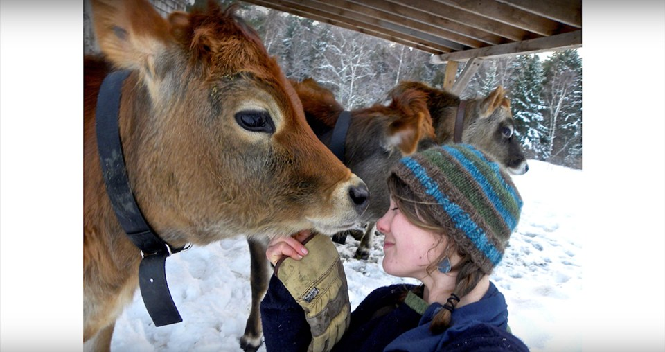 Caitlin frame nuzzles a cow nose-to-nose on a snowy winter day