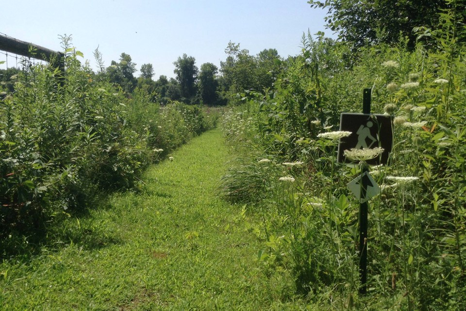 wild spaces and native plants are left to bloom and attract pollinators at Roxbury Farm
