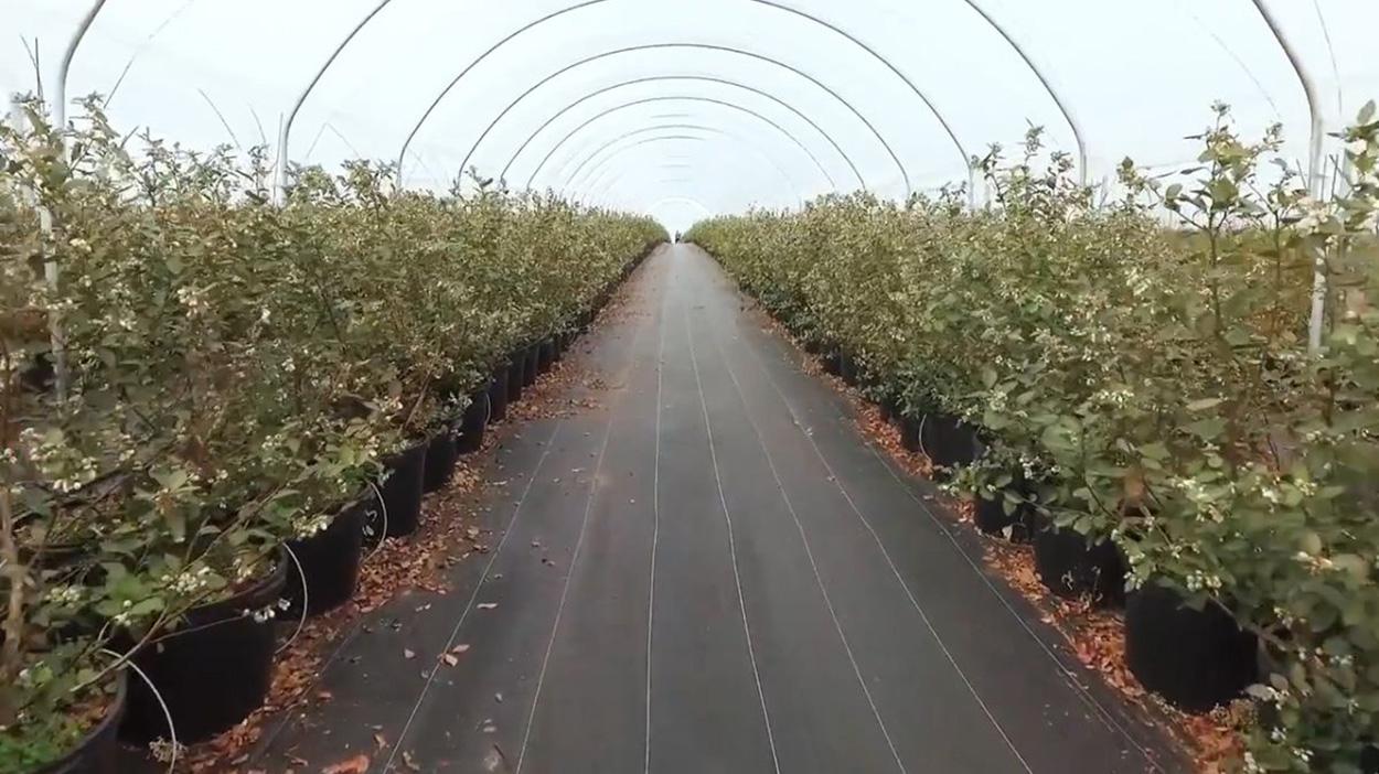 plastic-barriers-prevent-organic-matter-soil-building