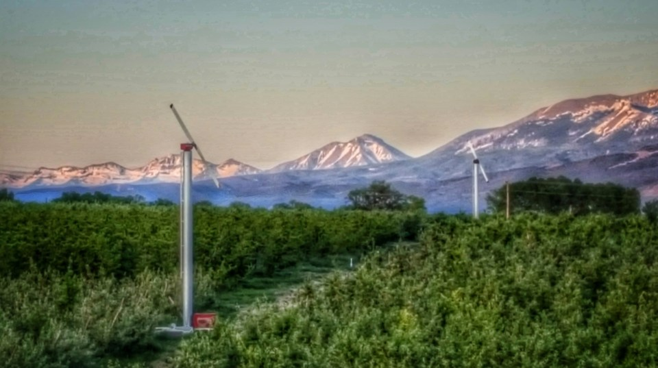 colorado windmills surrounded by fruit trees against backdrop of snow covered mountains