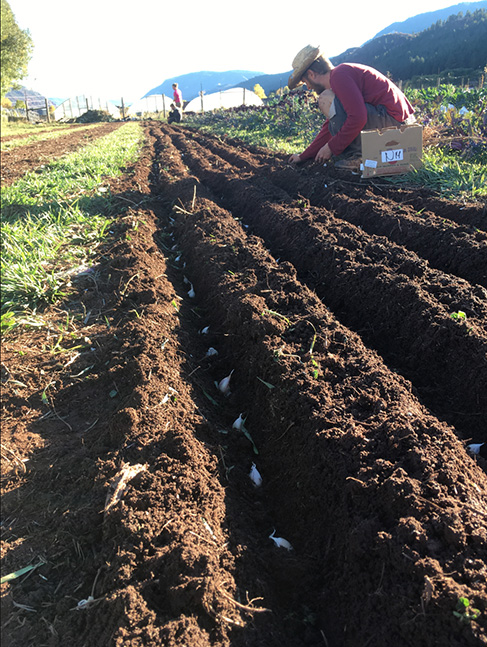 A farmhadn works in rows of soil on an organic farm